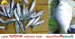 কাচালং নদীতে নিষেধাজ্ঞা অমান্য করে অবাধে চলছে 'মা মাছ' নিধন
