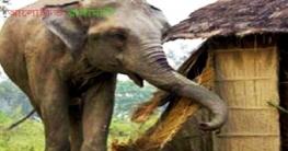 বান্দরবানে বন্যহাতির তাণ্ডবে প্রাণ গেল ঘুমন্ত কৃষকের