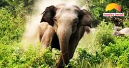 রাইখালীতে বন্য হাতির আক্রমণে মহিলার মৃত্যু
