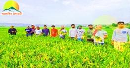 কৃষকের ধান কেটে ঘরে তুলে দিলো বরকল উপজেলা ছাত্রলীগ