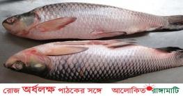 রুই মাছ খেলেই কমবে স্ট্রোকের ঝুঁকি, জানুন কতটুকু খাবেন